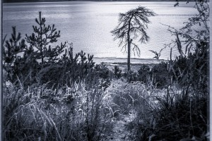 IMG_6894-Edit
