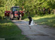 Непрестанното присъствие на животните